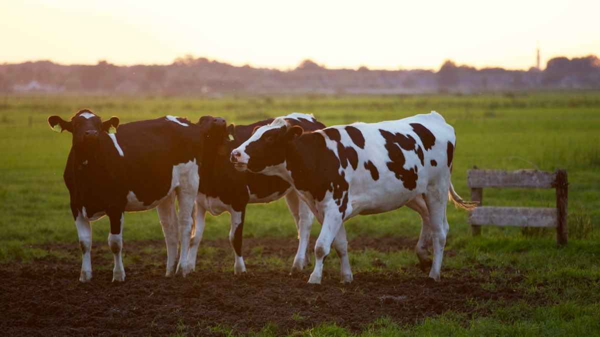 agriculture animal animal photography blur